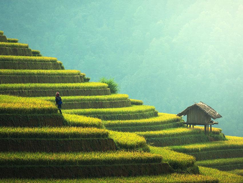 Κυριότερες Τάσεις του Αγροτικού Κλάδου για το 2019 - DK Marketing